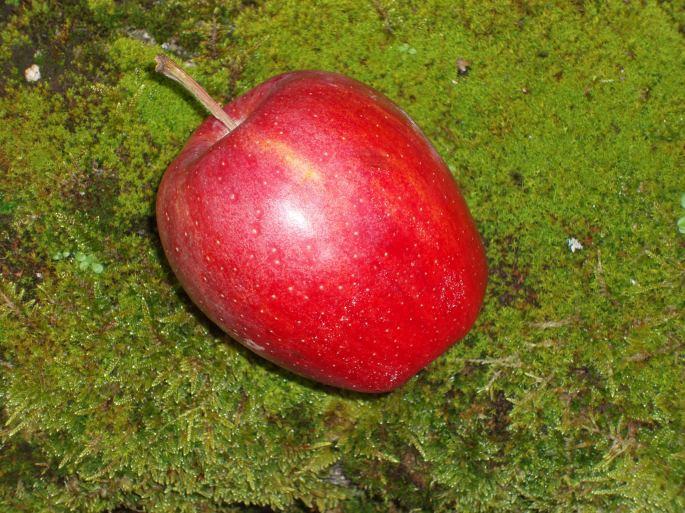 que d'histoires pour une pomme !