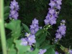 fleurs du Morvan