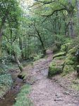 Un chemin dans le Morvan - photo personnelle