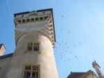 vol d'oiseaux à Bresse sur Grosne