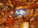 feuilles d'automne dans une forêt du Morvan