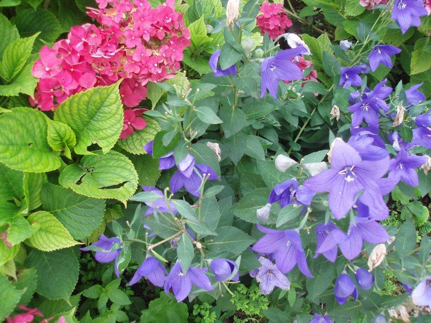 deux sortes de fleurs ...qui se marient bien